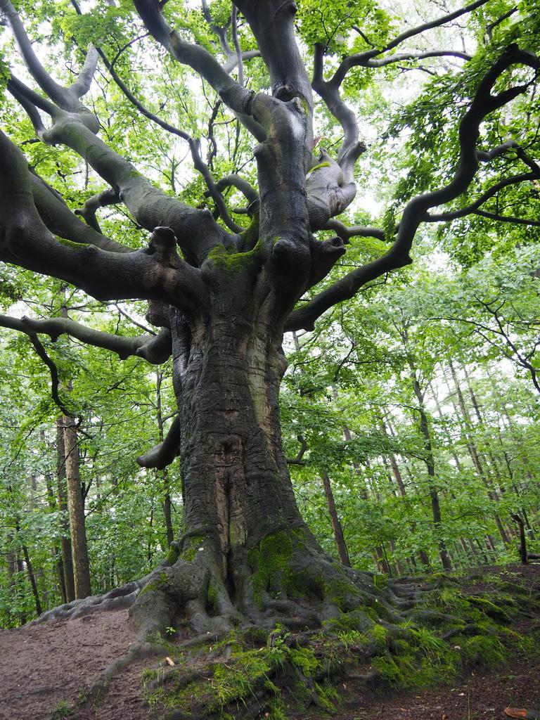De Heksenboom van Zwarte Kaat