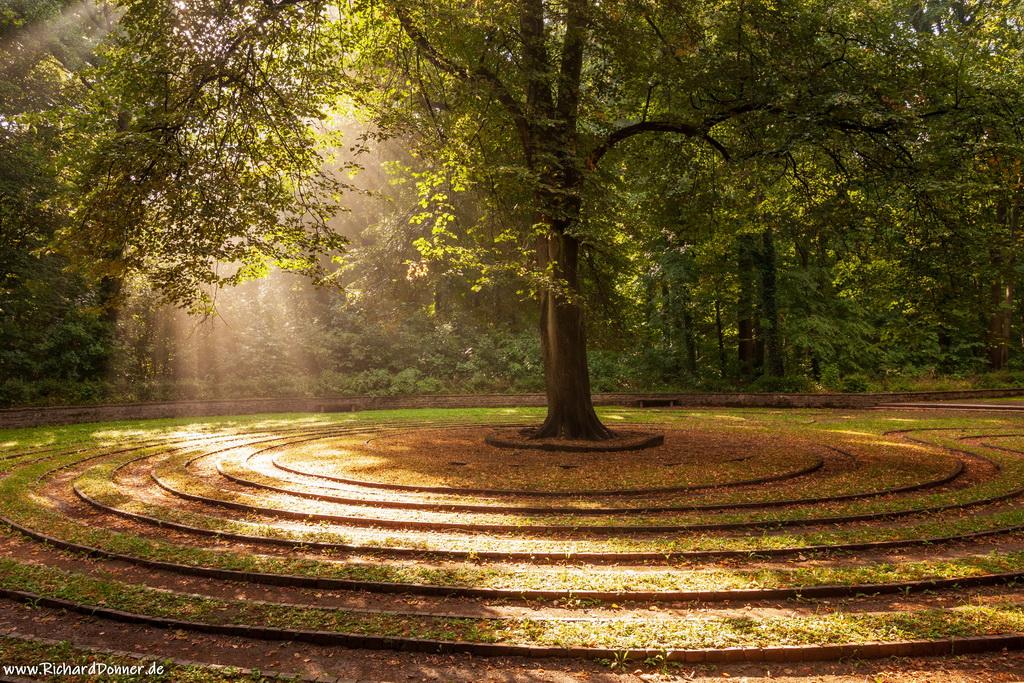 zonlicht, lindeboom, labyrint